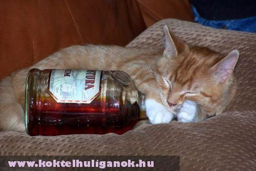 Rum cicus