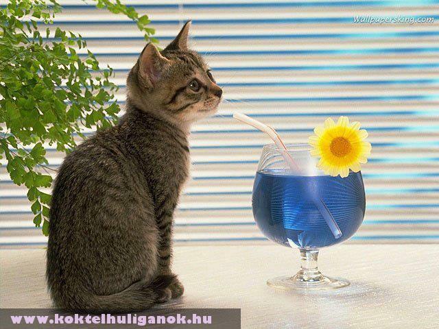 Koktélozó macska