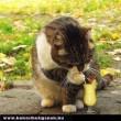 Macska koktélozik